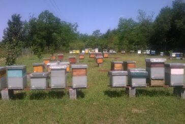 """""""Kačerski med"""" iz Lazarevca okuplja pčelare četiri okruga"""