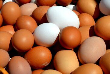 Kolika su ulaganja u proizvodnju jaja i brojlera?