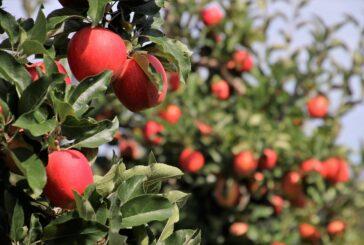 Kako odbraniti voćnjake i vinograde od patogena?