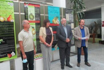 Srbija je bogata starim sortama voća koje treba sačuvati