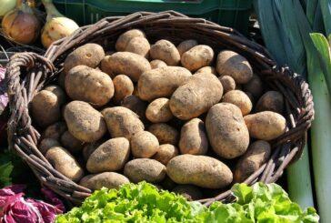 Proizvodnja krompira - rod 2020.godine