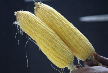 PIS: Zaštita kukuruza šećerca, kupusa i paprike