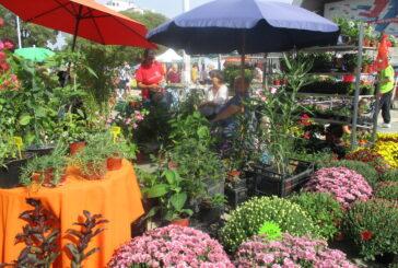 Novi Sad: Vikend okupan bojama i mirisama cveća