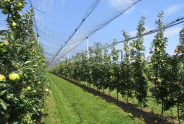 Rod jabuka 420.000 tona, raste izvoz