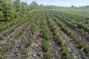 Lekovito bilje se može gajiti u celoj Srbiji