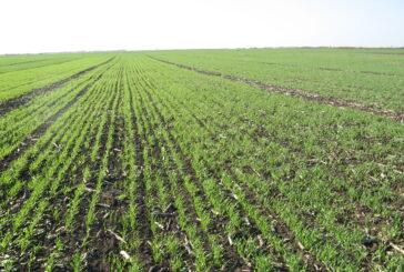 Srednji Banat: Privodi se kraju setva pšenice