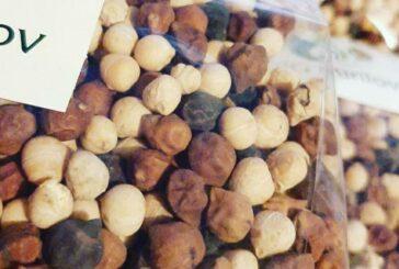 Leblebija - biljka idealna za male posede i zdravlje ljudi