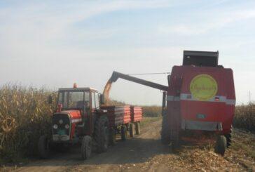 Imamo dovoljno kukuruza za izvoz, neće biti zabrane i uvođenja taksi