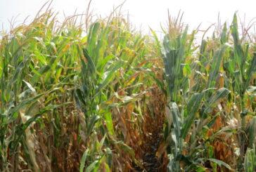 Cena poljoprivrednog zemljišta u srednjem Banatu nastavlja da raste