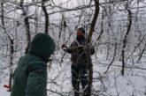 Sprovođenje fitosanitarnih mera u voćnjaku