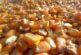 Produktna berza: I dalje rastu cene žitarica i uljarica