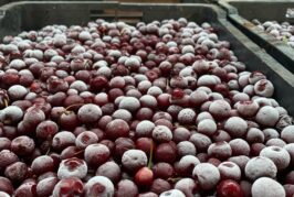 Kompanije iz Srbije dogovorile poslove vredne dva miliona evra na onlajn sajmu organske proizvodnje