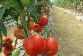 Organska hrana iz Srbije na digitalnoj svetskoj smotri BIOFACH od 17.-19. februara