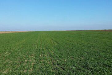 Prihrana useva na osnovu sadržaja azota i vlage u profilu zemljišta