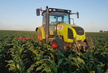 U Srbiji moguća nestašica nekih sorti semenskog kukuruza
