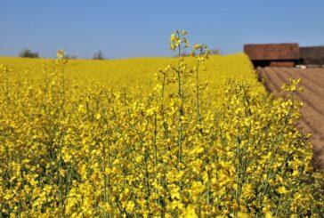 Subvencije će biti automatski isplaćene na račun poljoprivrednika, bez zahteva