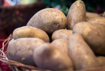 Domaći krompir bi mogao da završi na deponiji zbog uvoza, poljoprivrednici traže rešenje