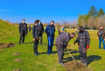Vode Vojvodine: Na području Vršca biće posađeno 53.000 stabala
