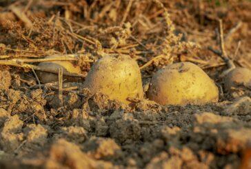 Preventivne mere u kontroli štetnih organizama u proizvodnji krompira