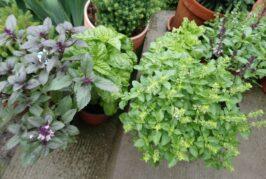 """U """"Irišku bašticu""""  po seme i rasad povrća i začinskog bilja koji mogu biti i ukras svakog balkona"""