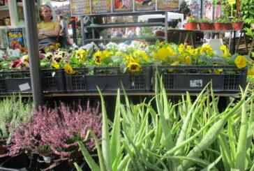 Prolećna izložba cveća od 2. do 11. aprila u beogradskom parku Manjež