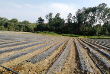 Radovi u jagodnjaku početkom vegetacije