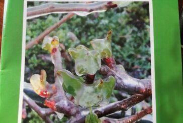 Mere i metode zaštite od mraza u voćarstvu