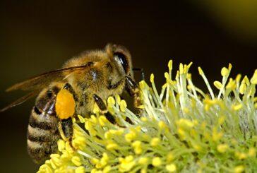 Srbija dobija prvu digitalnu mapu pčelinjaka i pčelinje ispaše