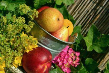 U Lapovu površine pod voćem povećane čak za 80 odsto