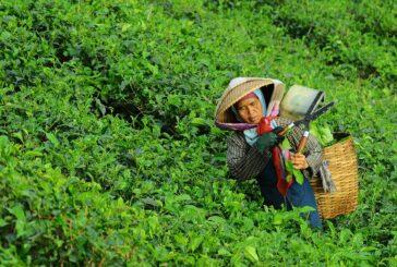 Osnaživanje žena i devojaka presudno je za osiguranje održive sigurnosti hrane nakon COVID-19, kažu šefovi UN-ovih agencija za hranu za Međunarodnog dana žena
