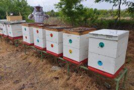 Počelo podnošenje zahteva za subvencije po košnici pčela
