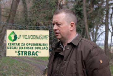 Naseljeni jeleni u lovišta centralne Srbije