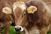 Senad Mahmutović: Novac usmeren Upravi za agrarna plaćanja