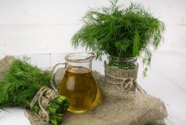 Mirođija - aromatičan začin i lekovita biljaka
