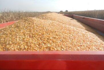 Najviša postignuta cena sojinog zrna ikada zabeležena