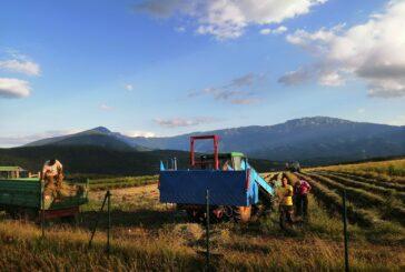 Poskupljenje sirovina i manjak komponenti podižu cene poljoprivredne mehanizacije