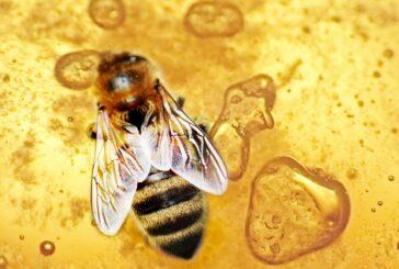 "Bosilegrad: Seminar ""Na dukatu pčele bruje"" – 27. avgusta"