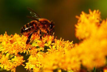 Pčele donose dobrobit i pčelarima i voćarima