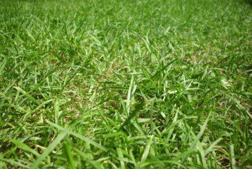 Trava nije šala -  korak po korak do lepog travnjaka