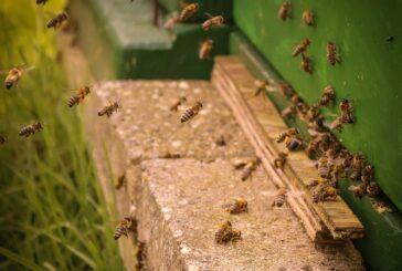 Kako sprečiti majsku bolest pčela?