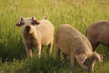 Zbog čega je resornom ministarstvu potrebna i uprava za stočarstvo?