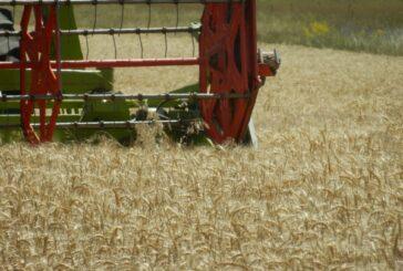 Pali prvi otkosi pšenice u Srednjem Banatu