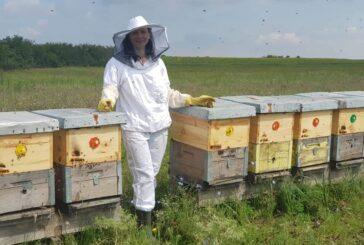 Šta se juna radi u pčelinjaku?