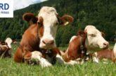 Uskoro IPARD poziv za investicije u poljoprivredi vredan 6,6 milijardi dinara