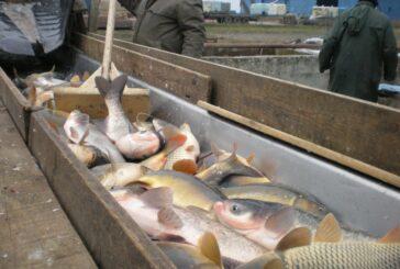APV: 20 miliona dinara za podizanje i rekonstrukciju ribnjaka