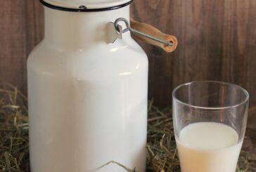 U celom svetu današnji dan posvećen je mleku