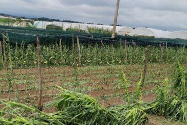 U Blacu grad uništio poljoprivredne kulture na oko 4.000 hektara