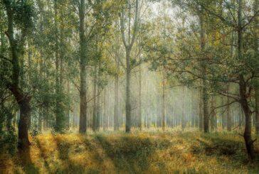 Nova strategija Evropske unije predviđa sadnju 3 milijarde stabala