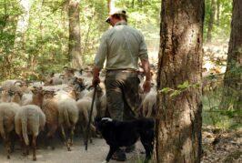 Inicijativa za izgradnju nacionalne klanice za ovce u Šumadiji