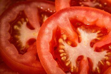 Kula: Potpisan ugovor za izgradnju fabrike za preradu paradajza